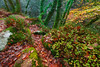 Forest floor fall (snowyturner) Tags: forest plym valley river autumn leaves rocks dartmoor trees footpath