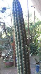 IMG_2927 (BadBunnny) Tags: nature naturaleza wild salvaje flowers flores flor flower cactus fire fuego circus circo malabares juggling mountain montañas snow nieve sky cielo