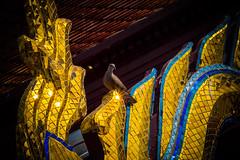 2016_04-Bangkok-M00058 (trailbeyond) Tags: animal architecture asia bangkok bird building dove gold location outdoors pigeon religiousbuilding temple templeoftheemeraldbuddha thailand thegrandpalace watphrakaew