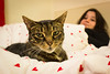 Leo and me (Catherine North) Tags: cat stripy tabby bed pet person