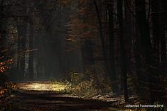Spot (grafenhans) Tags: sony alpha 700 alpha700 a700 tamron 5663200400 licht lichtung landschaft light laub wald winter sonne bäume