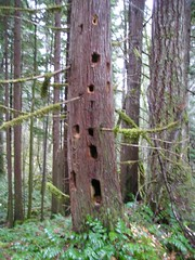 Woodpecker Housing