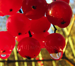 Red Drops keep falling on my Head