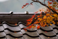 Autumn In Kyoto - by R26B