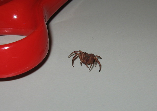 Spider on Desk