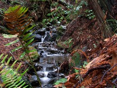20061209 Creek