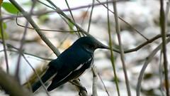 Bird (prashantby) Tags: bird panasonic birdy fz7