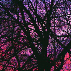 Stained Glass Branches (Musical Mint) Tags: pink trees sunset sky toronto color colour silhouette night colorful purple artistic branches creative violet colourful helluva outstandingshots abigfave musicalmint impressedbeauty aplusphoto