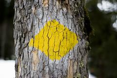 Yellow Diamond Marks the Spot