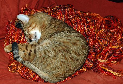Iggy on a rug