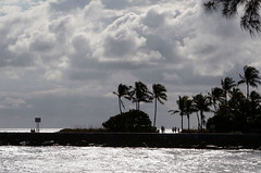 jetty 2 (lemank) Tags: ocean sky palm
