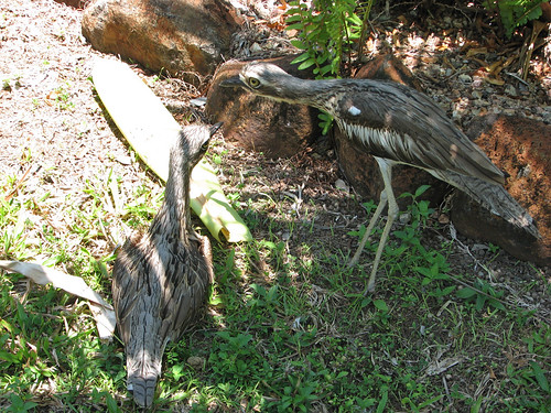 Bush-Stone Curlew Cairns