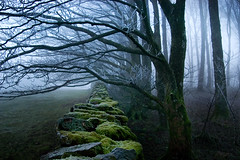 Frosted Flake Wood I (tommy martin) Tags: christmas uk winter england mist fog woods bravo lakedistrict cumbria impressedbeauty