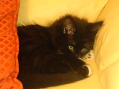 ella (sisterphonetica) Tags: cute cat kitten sleep fluffy paws
