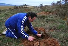 Yayo plantando un arbolito (Jorge Martin) Tags: ecology spain ecologa burgos treeplanting caminodesantiago oaktrees reforestation encinas holmoak atapuerca plantacin reforestacin ags roblesquejigos replantacin plantandorboles