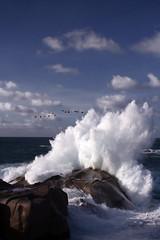 Crash-Splash (LucaPicciau) Tags: sardegna blue sea water birds rocks mare sardinia crash salt wave splash acqua santateresa ot onda capotesta testa gallura lupi santateresadigallura beautyisintheeye instantfave specnature lupi75 mywinners santateresagallura abigfave impressedbeauty