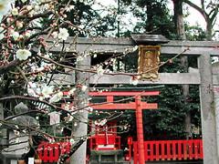-030308-02 (newton_tigers) Tags: kyoto   kitanotenmangu