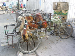 Xingcheng - Pheasants & Chickens