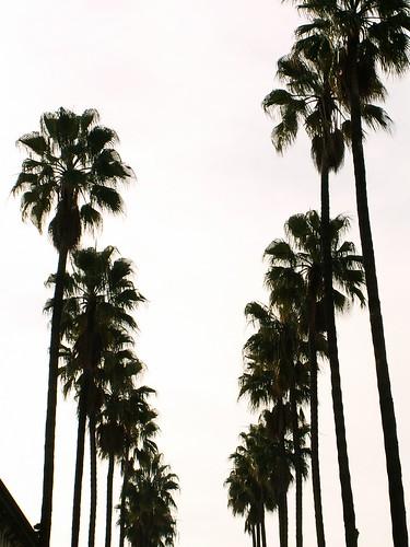 Lisboa - palms