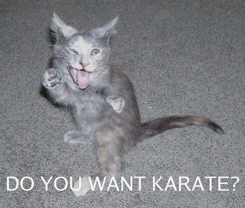 karate kitty