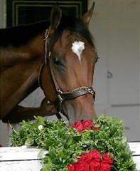 RIP Barbaro (Cowtools) Tags: horse barbaro