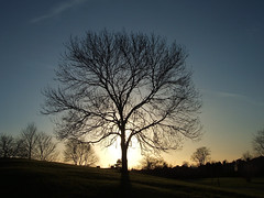 The Dreaming Tree /two (ilgiovaneWalter (Sobchak)) Tags: park uk winter england tree movie manchester europa europe erasmus unitedkingdom pearljam explore finepix fujifilm plattfieldspark albero soundtrack davematthews bigfish fallowfield inghilterra greatermanchester f455 barefootinthepark colonnasonora manofthehour withsong thedreamingtree fujifilmfinepixf455