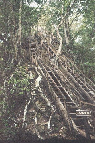 Staircase to Temple IV in Tikal (May 2006)