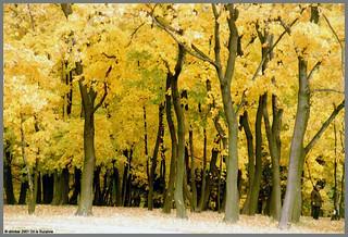 Autumn in Kolomenskoe | Herfst in Kolomenskoe