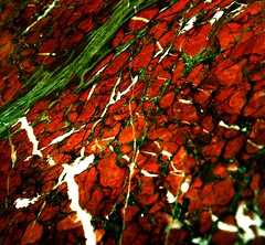 Marble Macro (annpar) Tags: macro green beautiful rust busy veins marble whitle