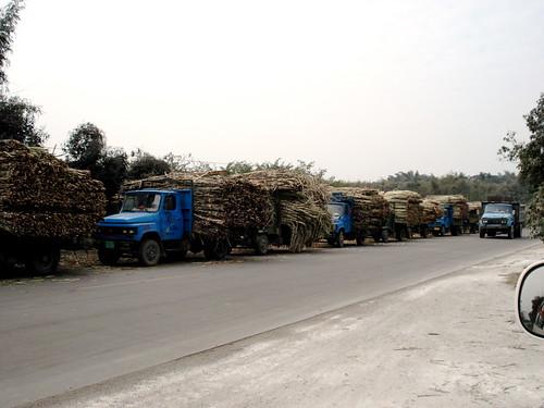 sugarcane.jpg