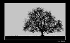 Lone Tree (Bonell Photography (dasbull)) Tags: light usa color colour art texture love tourism nature beautiful beauty contrast photoshop work dark real fun lumix us photo washington amazing cool fantastic artwork flickr niceshot shot angle natural northwest image awesome feel great joy perspective picture atmosphere location best sharp panasonic aberdeen frame passion pacificnorthwest pro northamerica wa washingtonstate pnw hardwork tone borders authentic exciting generic 2007 graysharbor fz50 amature joyfull twinharbors hoquiam dmcfz50 panasonicdmcfz50 dasbull ronbonell