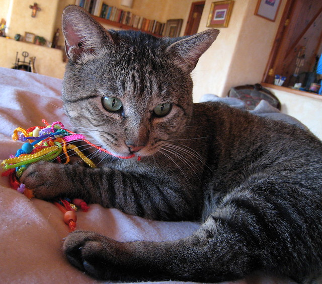 New Stringy Toy for Ojitos !