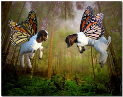 Kids in the Sky (Boered) Tags: baby kids photoshop butterfly thankyou jean goat boers vavavoom abigfave jeanvic
