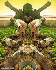 Espelho Nordeste (rubensdosanjos) Tags: nokia nordeste smg green latino amarica brazil brasil espelho tree surreal digital oldman old rn smartphone