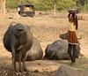 Village girl (bokage) Tags: india bokage madhyapradesh khajuraho girl cowdung buffalo village
