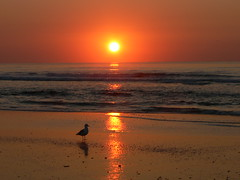 ***EXPLORE*** FBI- seagull roamin' the beach for breakfast at todays sunrise (Frozen in Time photos by Marianne AWAY OFF/ON) Tags: seagulls beach nature birds wow reflections flickr seagull sunsets scout explore chapeau beaches wisdom wildwood fbi italians nationalgeographic wildwoodnewjersey flickraddicts flickrexplore friends~ flickrscout favorites60 views1000 birdsbirdsbirds awesomenature wildwoodbeach njnewjersey flickrsmileys mywinners sunsetsandsunrisesaroundtheworldpool mywinnerstrophy worldbest godsart amomentoflife inexploreinterestingness flickrbronze explorethis wowiekazowie naturegroupfromanimalstoplantspool ourwonderfulworldpool realonecommentpost1comment5readtherulespool ratemysunsetsunrise nevenevepool favorites10pool scoutflickrexplore favoritesbyinterestingness news21 mymostfavedone interestingnessunlimited collectivedreamjournal goldsealofquality myphotosthatmadeittoscout worldsbestdazzlingshots scoutflickr newjerseybeaches yourpreferredpicture unlimitedphotosnorules beautyunnotice photosthatmadeittoexplore birdsinsideandoutside onlylandscapesandsunset solopaisajesyatardeceresonlylandscapesandsunset allkindsofbeauty bestofsunrisetosunsetii wildlifenaturephotography theenvyenviedphotosonflickr 1000views40favesqualityandquantity youarea5starwinner photoswith5ormoreawardshereround3 1540views photosthatmadeittoscoutexplore