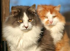 Two of a Kind (Boered) Tags: cats baby cat fuzzy uncle nephew instantfave animaladdiction abigfave impressedbeauty binkyssonandgrandson