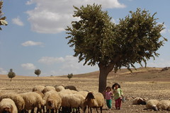 Life (kezwan) Tags: tree sheep heart kurdish kurd krt kurdi outstandingshots abigfave