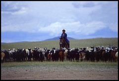 Mongolian Boy with Herd of Goats (Stephen van der Mark) Tags: beautiful wow interesting goat mongolia stunning nomad ulaanbaatar herdsmen herder hovsgol