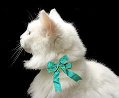 This is Andrea, an elegant white cat whose owner died. ~ EXPLORED (Pixel Packing Mama) Tags: beautiful gorgeous stunning catsandkittensset whitecats petsinprofile heartlandhumanesociety notmycat top20cats v5000 pixelpackingmama dorothydelinaporter worldsfavorite dashingdivasprettyprincesses notmypet favorites45 somebodyelsescat catcentury reallyunlimited gattigattinigattoni montanathecat~fanclubpool favoritedpixset mostinterestingaccordingtoflickralgorithmset kissablekats cc5000 spcacatspool spcacats catswithclass holidaykitties cat5000 christmastime2006set ultimateshot catsanddogsset catswithclass~chatselegants catswithclasschatselgantpleasecommentreadrulespool ceruleanthecat~fanclub greatpixgallery20favespool commentedwithanicondirectorygroup ceruleanthecat~fanclubpool whitecatsset reallyunlimitedpool worldsfavoritepool views5000pool views1000andupdomesticcatsonlypool allcatsallowedpool uploadedsecondhalfof2006set 50commentspool chosenbyflickrexploreset 50plusphotographersaged50andbetterpool update4sure views5000whenapproved 30to39favoritescatscommentingrequiredpool update4sureset christmascatskittensset favdone worldsfavoritegroup oversixmillionaggregateviews over430000photostreamviews