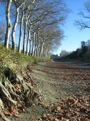 Canal du Midi, leer (sopran) Tags: winter france empty leer hiver dezember aude languedoc vide decembre canaldumidi platane platanen platanes