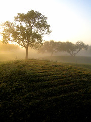 Misty Hill (bedheadredhead) Tags: bestnaturetnc06