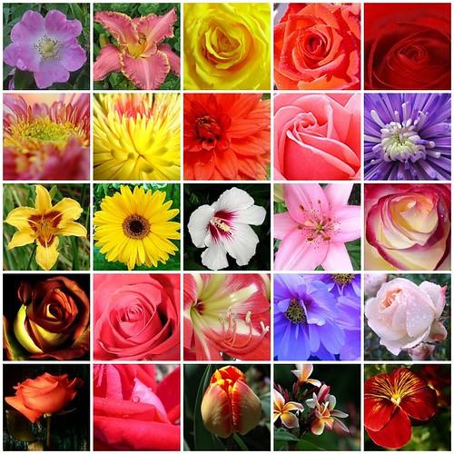 Kirmizi güller sari güller sari cicekler kirmizi cicekler