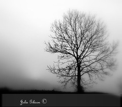 single tree (JulesCanon) Tags: bw mist tree fog blackwhite fuji single s7000 flickrchallengegroup flickrchallengewinner braehillportfolio 7daysofshooting monomonday week45blackandwhiteincolour