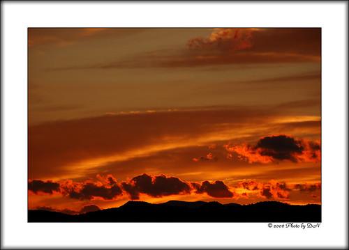 Bosque de Apache dusk sky