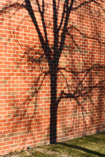 Tree On Brick 0929