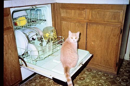 katinas ant indaploves