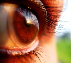 Sunrise in my eyes (visithra) Tags: blue iris brown macro reflection eye texture bar sunrise reflex eyes lashes 2550fav malaysia faceless topv777 eyelash kualalumpur lookinside window2thesoul oneeyed windowtothesoul contactlense topf30 abigfave diamondclassphotographer trancephoto