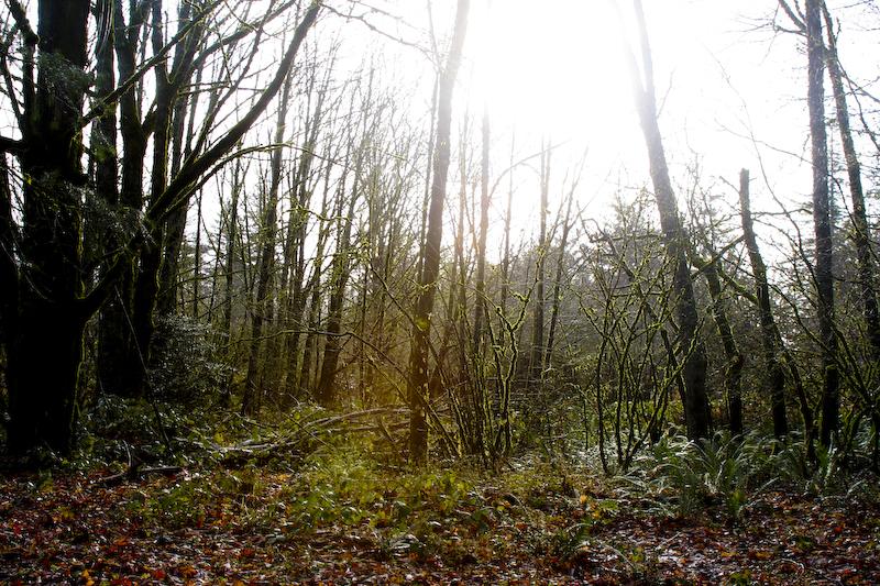 Sunny Foggy Woods