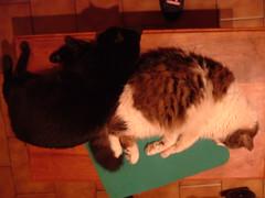 (iv78) Tags: verde sepia negro dream gatos sueo piso tonos chinchu